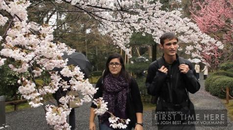 Cherry Blossoms at the Ryōan-ji Zen temple in Kyoto