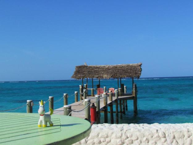 Buttercup - Nassau Bahamas